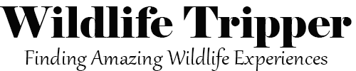 Wildlife Tripper - Finding Amazing Wildlife Experiences – Wildlife Tourism Blog