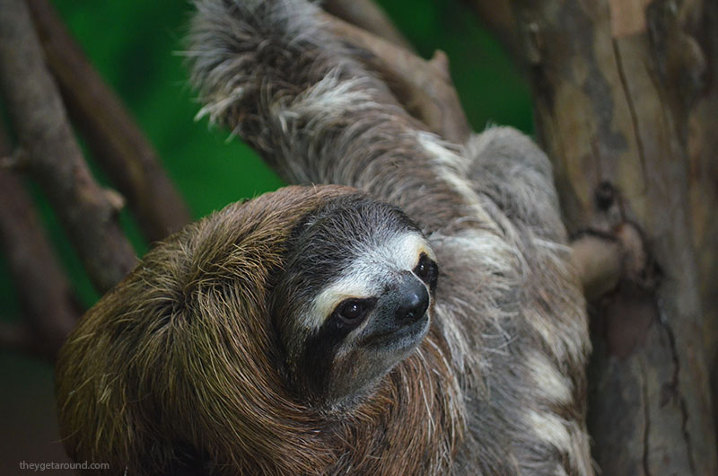 sloth sanctuary costa rica