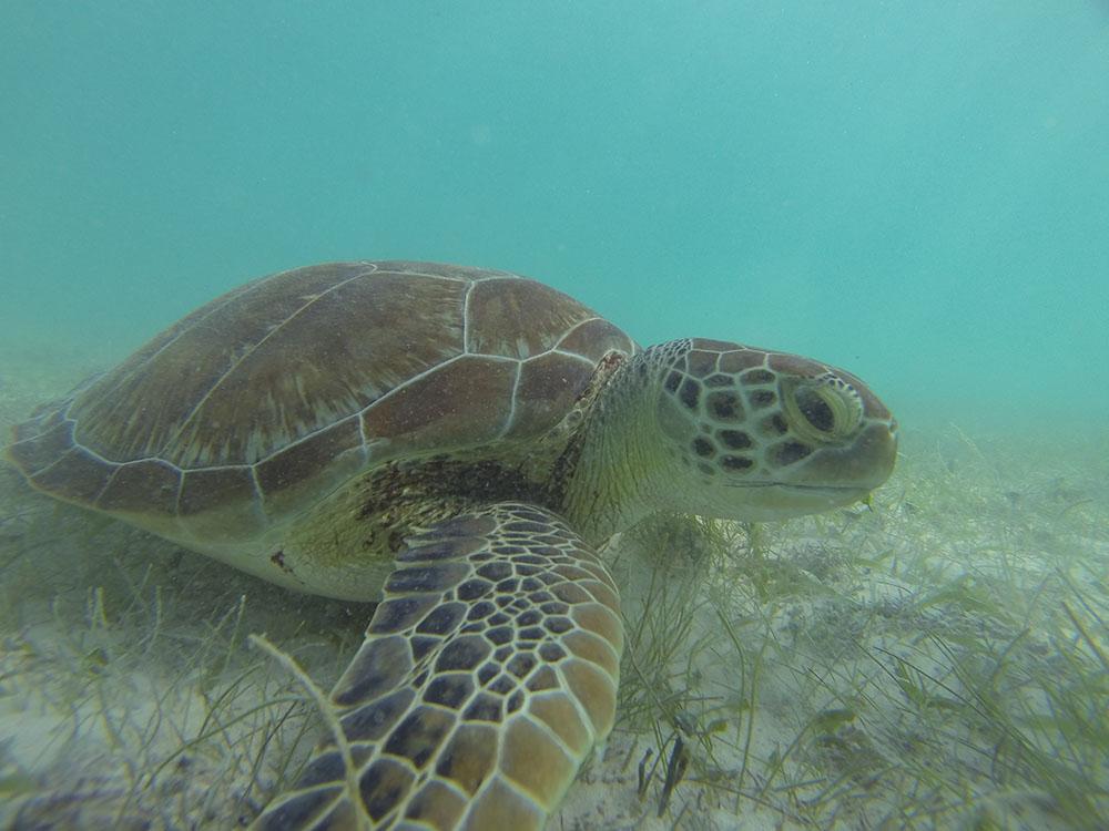 best wildlife experiences, swimming with turtles in akumal