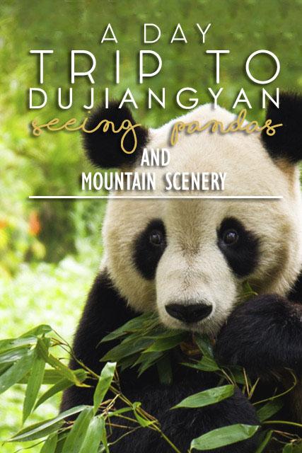 """""""chengdu panda tour"""", """"dujiangyan panda base"""", """"dujiangyan irrigation system"""", """"dujiangyan panda center"""", """"dujiangyan giant panda center"""""""